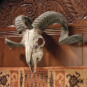 Corsican Ram Skull and Horns Wall Trophy