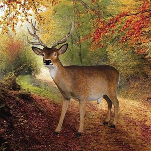 Forest White Tailed Buck, Male Deer Statue