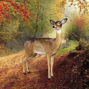 Forest White Tailed Doe, Female Deer Statue