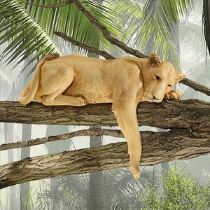 Lioness of Namibia Statue